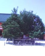 Heian2