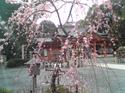 Nagaoka3_2